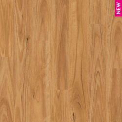 Queensland Flooring Centre Laminate Flooring - Eligna Blackbutt